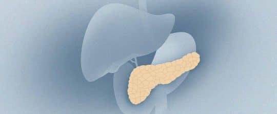 Illustration der Bauchspeicheldrüse