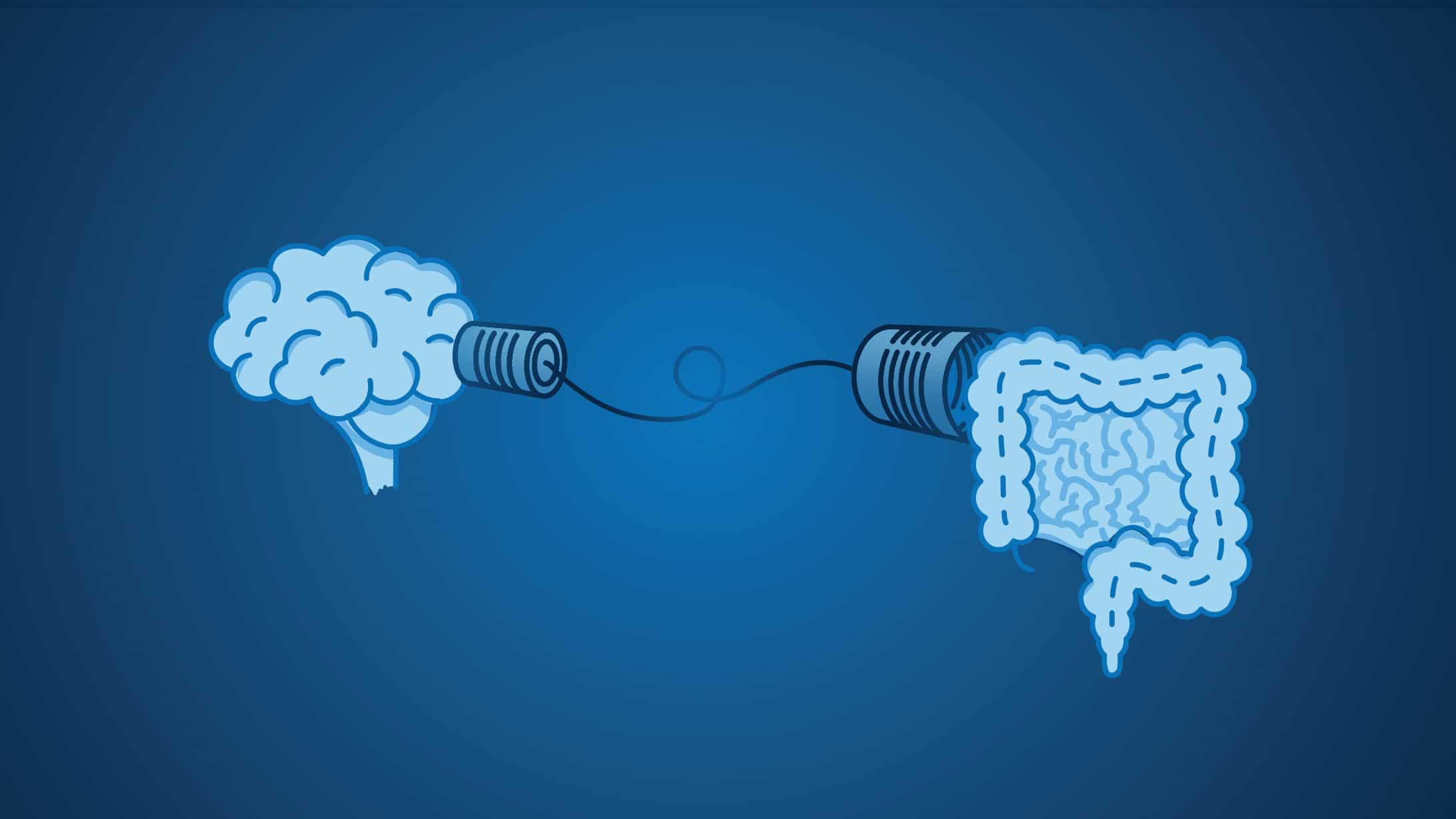Illustration: Gehirn und Dam kommunizieren via Schnurtelefon